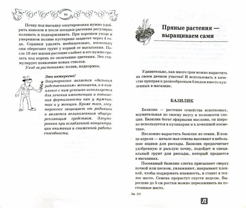 Иллюстрация 1 из 16 для Лекарственные и пряные растения. Выращиваем, собираем, заготавливаем, применяем - С. Калюжный | Лабиринт - книги. Источник: Лабиринт