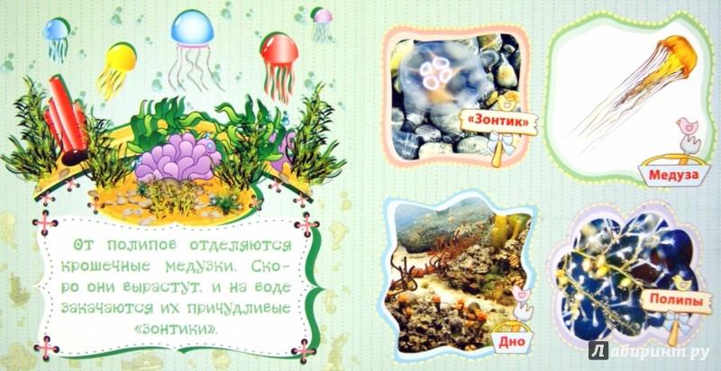 Иллюстрация 1 из 12 для Морские обитатели у себя дома - Вера Мельник | Лабиринт - книги. Источник: Лабиринт