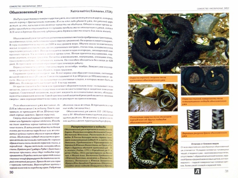 Иллюстрация 1 из 14 для Атлас-определитель. Змеи. Виды фауны России - Дунаев, Орлова | Лабиринт - книги. Источник: Лабиринт