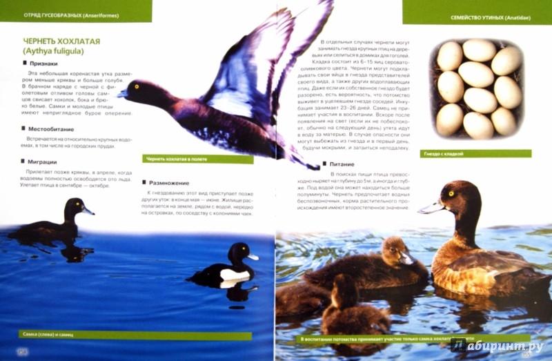 Иллюстрация 1 из 37 для Птицы европейской части России - Василий Вишневский   Лабиринт - книги. Источник: Лабиринт