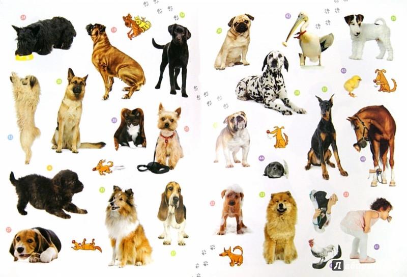 Иллюстрация 1 из 24 для Мои друзья собаки. Энциклопедия животных с наклейками | Лабиринт - книги. Источник: Лабиринт