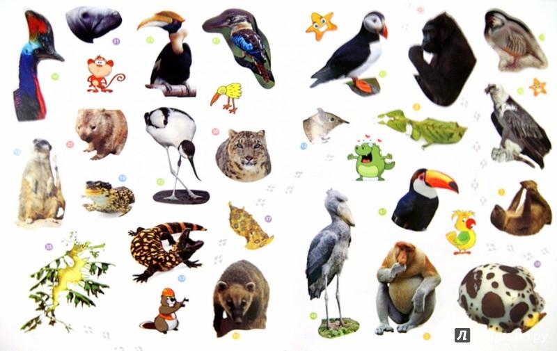 Иллюстрация 1 из 3 для Редкие животные. Энциклопедия животных с наклейками | Лабиринт - книги. Источник: Лабиринт
