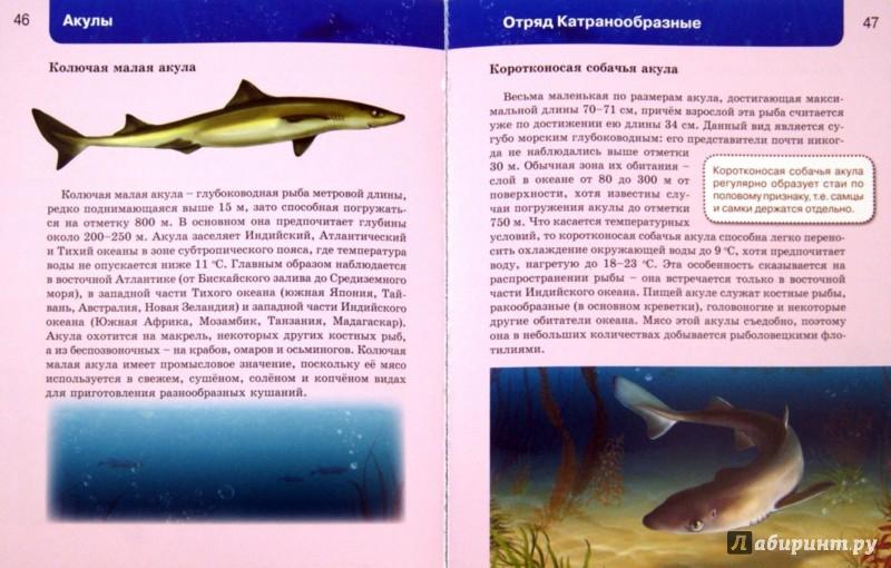 Иллюстрация 1 из 31 для Акулы | Лабиринт - книги. Источник: Лабиринт