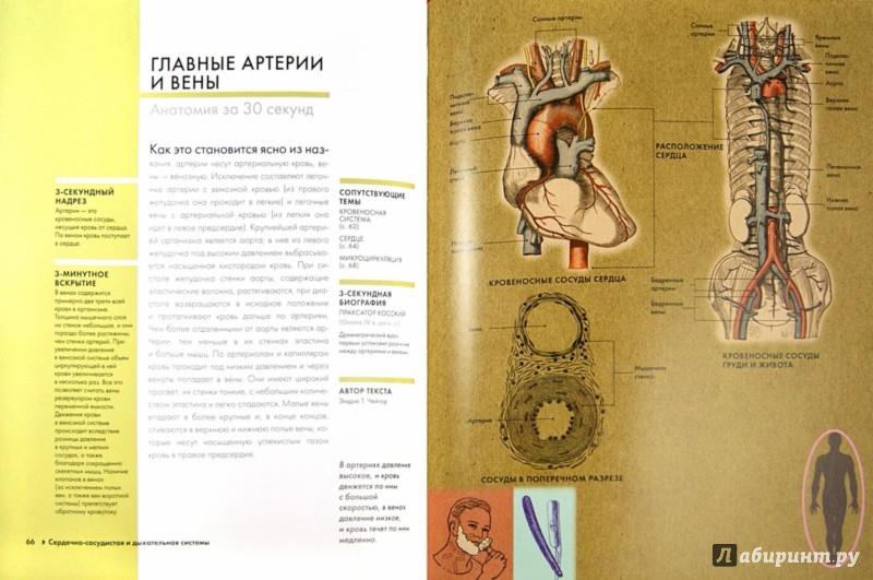 Иллюстрация 1 из 15 для Анатомия - Финн, Барбаро-Браун, Бишоп | Лабиринт - книги. Источник: Лабиринт