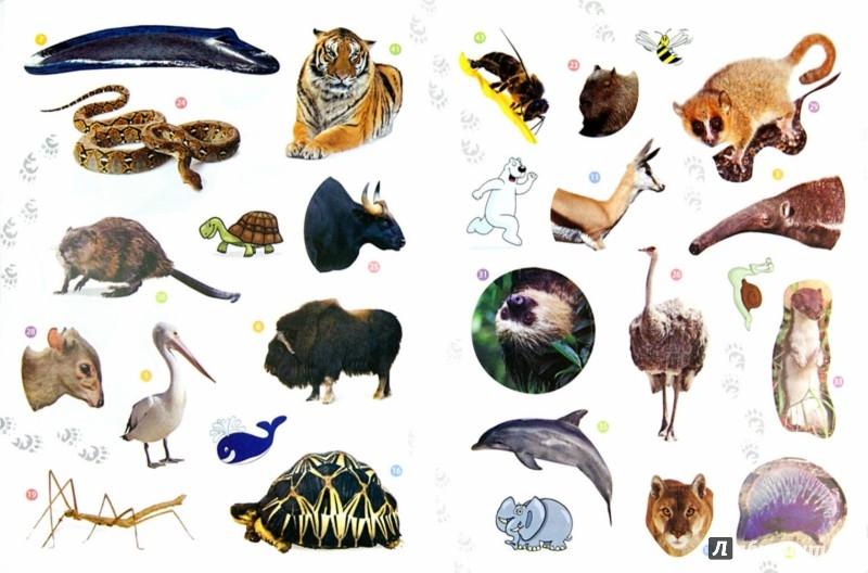 Иллюстрация 1 из 27 для Животные-рекордсмены. Энциклопедия животных с наклейками | Лабиринт - книги. Источник: Лабиринт