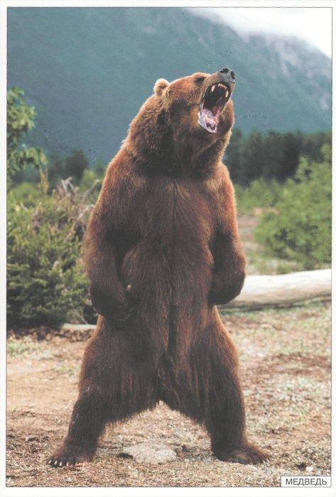 Иллюстрация 1 из 8 для Животные средней полосы. Наглядно-дидактическое пособие | Лабиринт - книги. Источник: Лабиринт