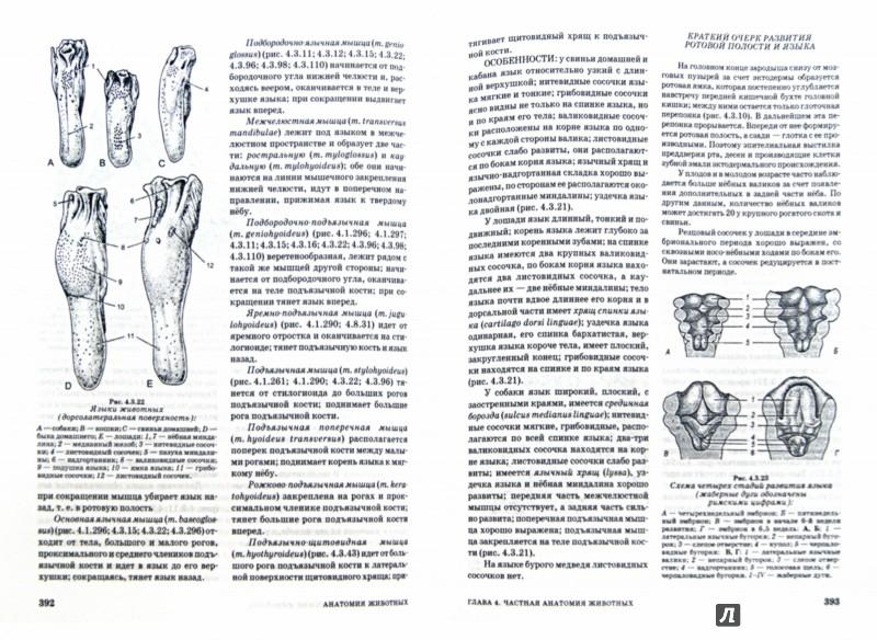 Иллюстрация 1 из 16 для Анатомия животных. Учебное пособие (+DVD) - Зеленевский, Зеленевский | Лабиринт - книги. Источник: Лабиринт