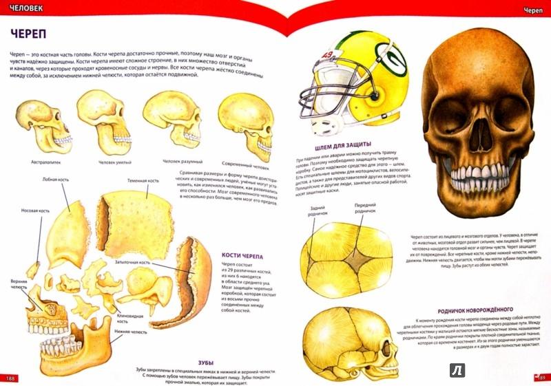 Иллюстрация 1 из 46 для Самая большая детская энциклопедия - Юлия Феданова | Лабиринт - книги. Источник: Лабиринт