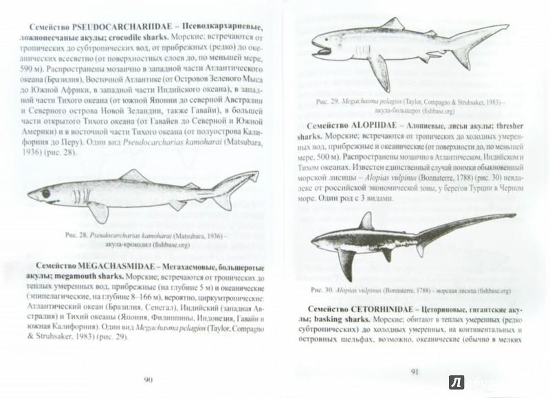 Иллюстрация 1 из 16 для Ихтиология. Учебник - Пономарев, Баканева, Федоровых | Лабиринт - книги. Источник: Лабиринт