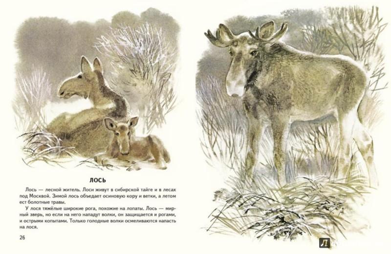 Иллюстрация 1 из 22 для Первое солнышко - Геннадий Снегирев   Лабиринт - книги. Источник: Лабиринт