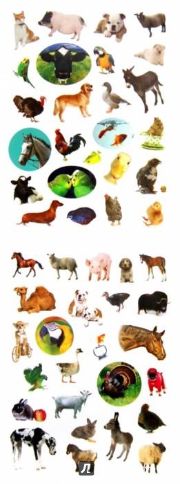 Иллюстрация 1 из 13 для Домашние любимцы | Лабиринт - книги. Источник: Лабиринт