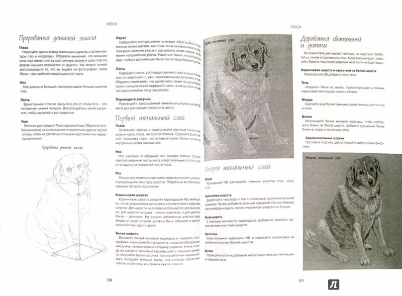 Иллюстрация 1 из 16 для Как рисовать животных. Книга не только для тех, кто хочет научиться рисовать - Карен Пул | Лабиринт - книги. Источник: Лабиринт