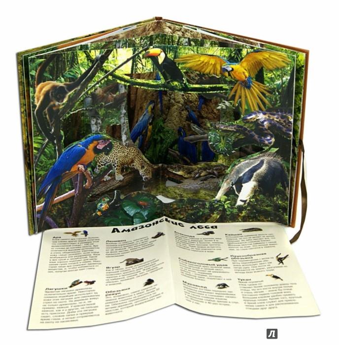 Иллюстрация 1 из 18 для Удивительные животные | Лабиринт - книги. Источник: Лабиринт