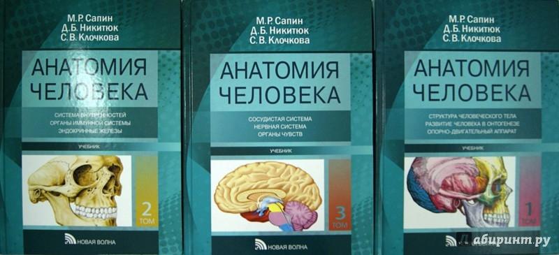 Иллюстрация 1 из 10 для Анатомия человека. Учебник в 3-х томах - Сапин, Клочкова, Никитюк | Лабиринт - книги. Источник: Лабиринт