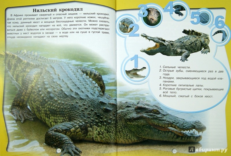 Иллюстрация 1 из 17 для Животные - Д. Кошевар | Лабиринт - книги. Источник: Лабиринт