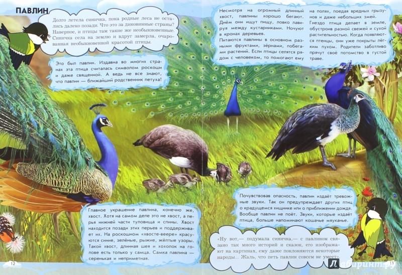 Иллюстрация 1 из 19 для Кто поёт лучше всех? Птицы - Анна Макулина | Лабиринт - книги. Источник: Лабиринт