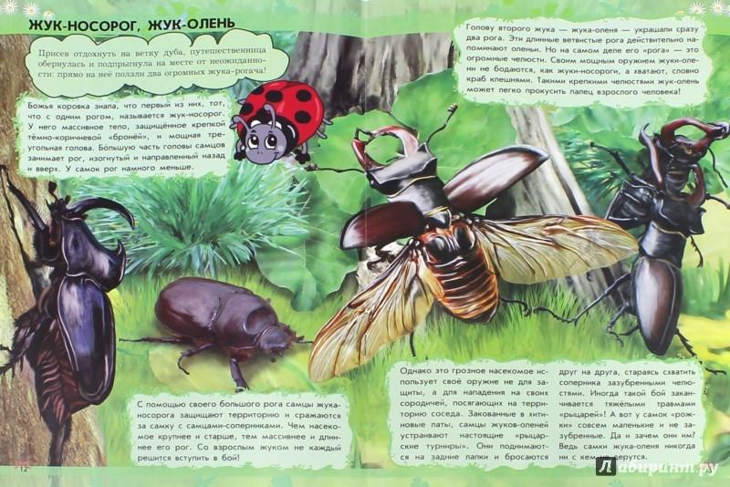 Иллюстрация 1 из 15 для О чём поёт кузнечик? Насекомые - Анна Макулина | Лабиринт - книги. Источник: Лабиринт
