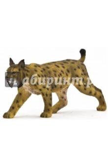 Иберийская рысь (Iberian Lynx) (387064)