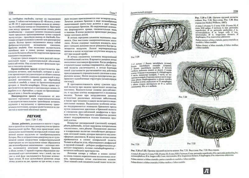Иллюстрация 1 из 5 для Анатомия собаки и кошки - Амзельгрубер, Бёме, Фревейн | Лабиринт - книги. Источник: Лабиринт