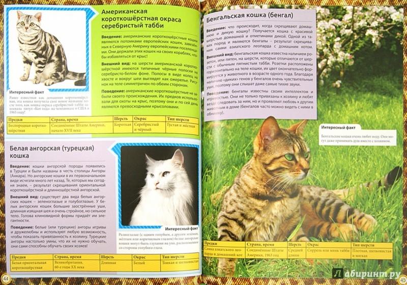 Иллюстрация 1 из 20 для Энциклопедия о кошках. Все о кошках | Лабиринт - книги. Источник: Лабиринт