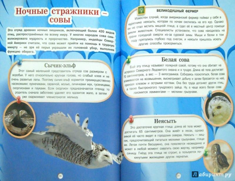 Иллюстрация 1 из 20 для Птицы - Дмитрий Кошевар | Лабиринт - книги. Источник: Лабиринт