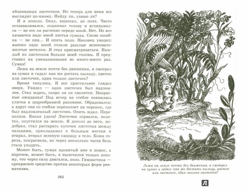 Иллюстрация 1 из 14 для В стране дремучих трав - Владимир Брагин | Лабиринт - книги. Источник: Лабиринт