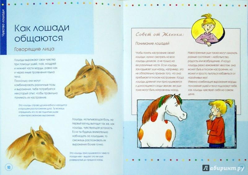 Иллюстрация 1 из 3 для Учимся понимать лошадей вместе с Кадди - Карола Кессель | Лабиринт - книги. Источник: Лабиринт