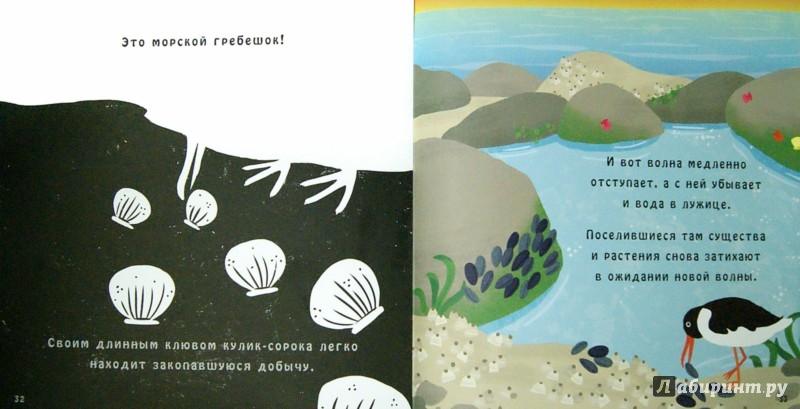 Иллюстрация 1 из 25 для Что скрывает морской берег? - Кэррон Браун | Лабиринт - книги. Источник: Лабиринт