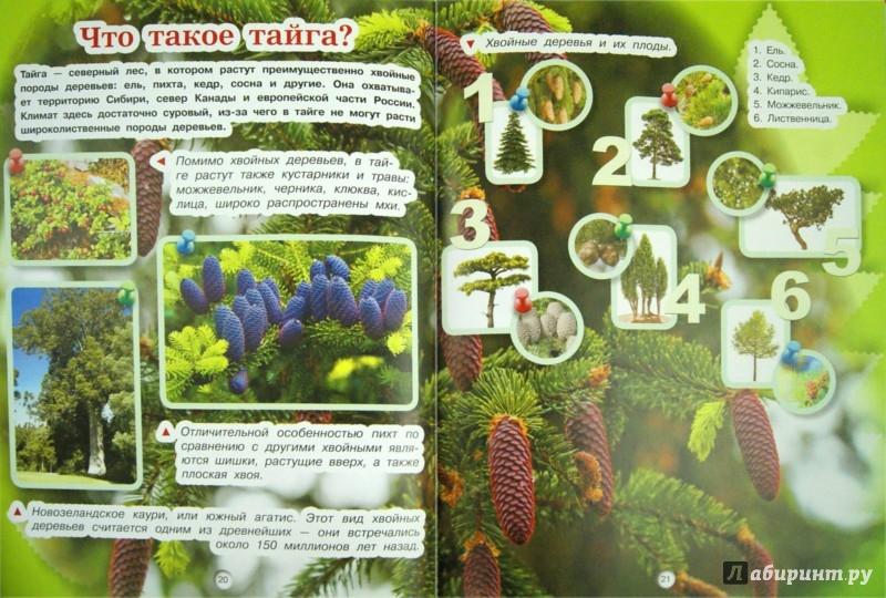 Иллюстрация 1 из 12 для Растения - Елена Хомич | Лабиринт - книги. Источник: Лабиринт