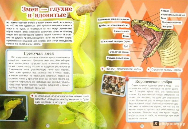 Иллюстрация 1 из 11 для Хищники - Дмитрий Кошевар | Лабиринт - книги. Источник: Лабиринт