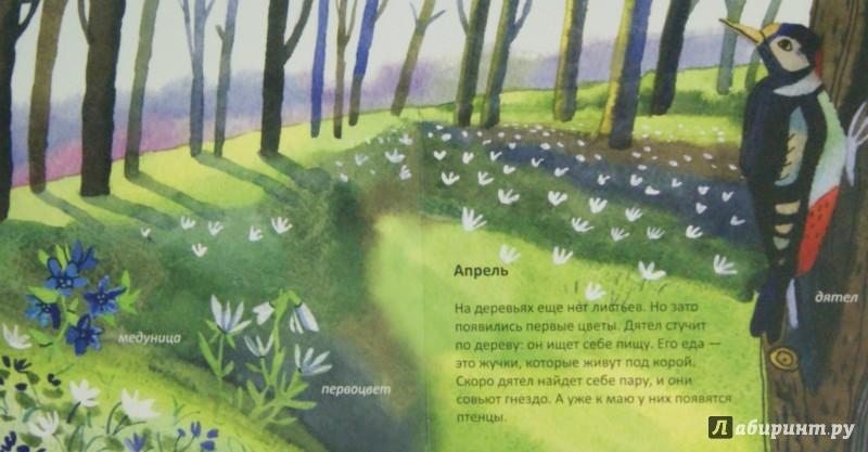 Иллюстрация 1 из 17 для Лес. Времена года - Анна Веркина | Лабиринт - книги. Источник: Лабиринт