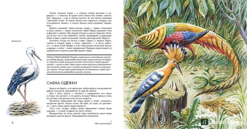 Иллюстрация 1 из 45 для Птицы. Орнитология в картинках - Николай Сладков   Лабиринт - книги. Источник: Лабиринт
