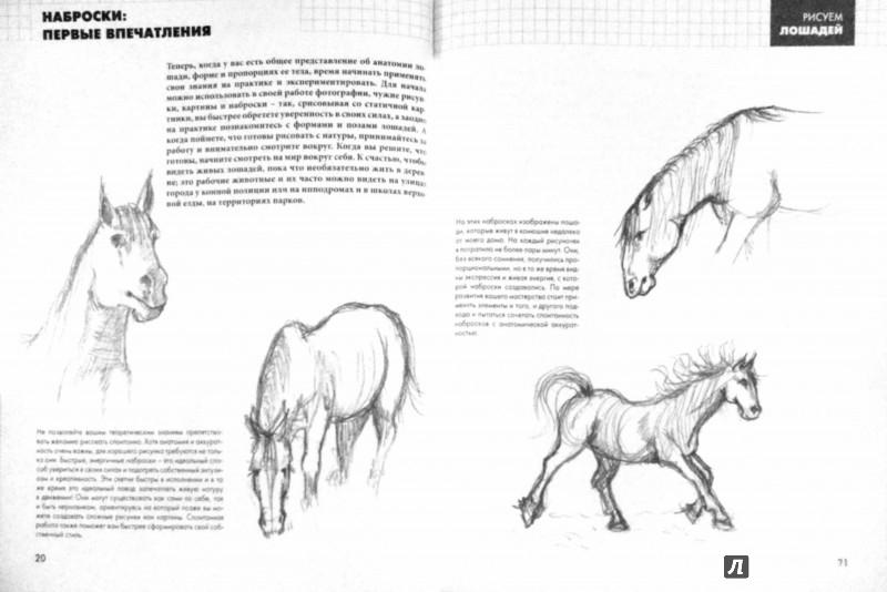 Иллюстрация 1 из 5 для Рисуем лошадей - Эйми Уилшер | Лабиринт - книги. Источник: Лабиринт