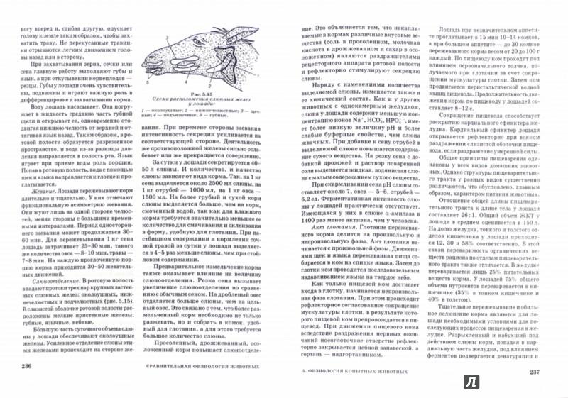 Иллюстрация 1 из 4 для Сравнительная физиология животных. Учебник - Иванов, Войнова, Ксенофонтов | Лабиринт - книги. Источник: Лабиринт