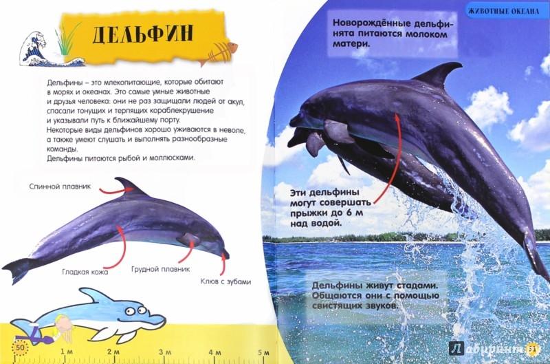 Иллюстрация 1 из 7 для Моя первая книжка. Животные - Ди Филипс | Лабиринт - книги. Источник: Лабиринт