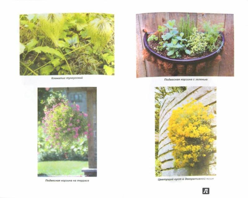 Иллюстрация 1 из 22 для Вертикальное озеленение в саду, во дворе - Александр Карпов | Лабиринт - книги. Источник: Лабиринт