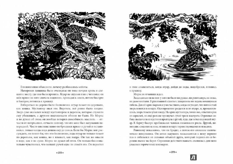 Иллюстрация 1 из 60 для Всадник без головы - Рид Майн | Лабиринт - книги. Источник: Лабиринт