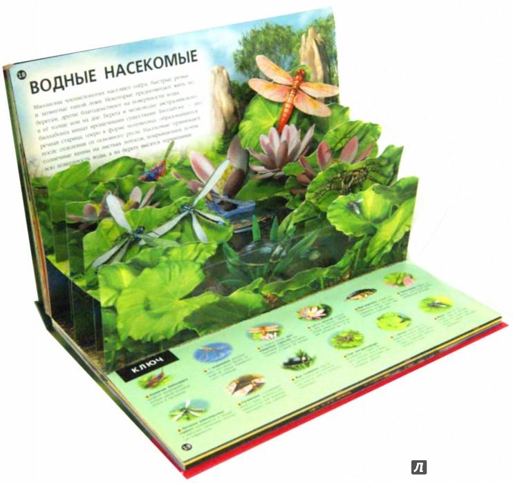 Иллюстрация 1 из 13 для Насекомые и пауки - Джен Грин | Лабиринт - книги. Источник: Лабиринт