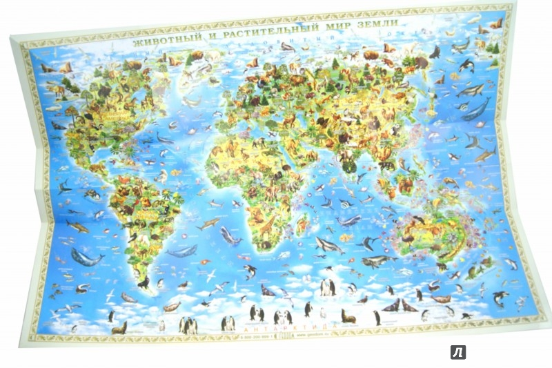 Иллюстрация 1 из 18 для Животный и растительный мир Земли. Карта. Складная. | Лабиринт - книги. Источник: Лабиринт