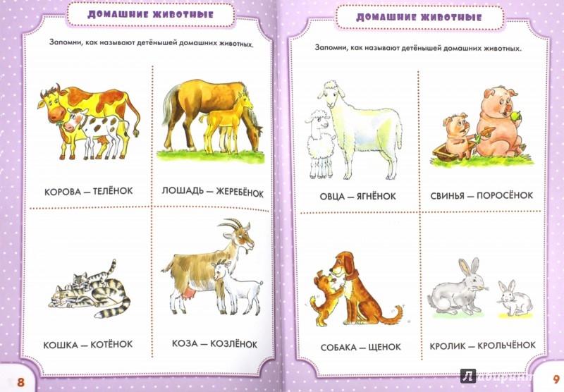 Иллюстрация 1 из 23 для Мир животных. Книжка первых знаний - Олеся Жукова | Лабиринт - книги. Источник: Лабиринт