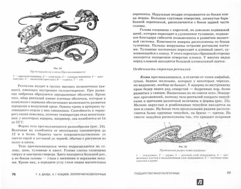 Иллюстрация 1 из 16 для Зоология позвоночных. Учебное пособие - Дауда, Кощаев | Лабиринт - книги. Источник: Лабиринт