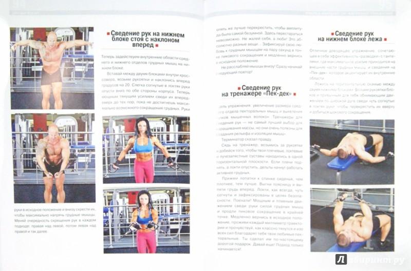 Иллюстрация 1 из 9 для Бодибилдинг. Базовая система упражнений - Дмитрий Мурзин   Лабиринт - книги. Источник: Лабиринт