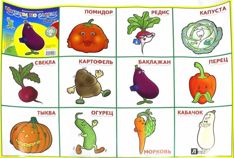 Иллюстрация 1 из 4 для Плакат. Карточки. Овощи | Лабиринт - книги. Источник: Лабиринт