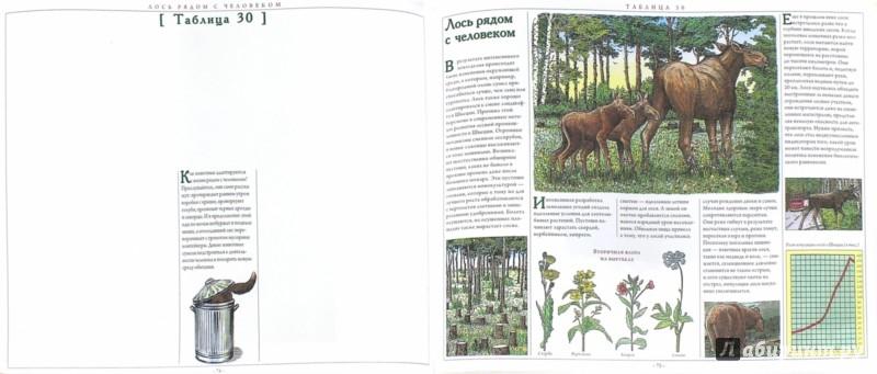 Иллюстрация 1 из 17 для Большая книга о животных. Рассказы директора зоопарка - Хеннинг Визнер | Лабиринт - книги. Источник: Лабиринт