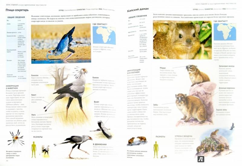 Иллюстрация 1 из 20 для Энциклопедия. Животный мир. Пустыни | Лабиринт - книги. Источник: Лабиринт