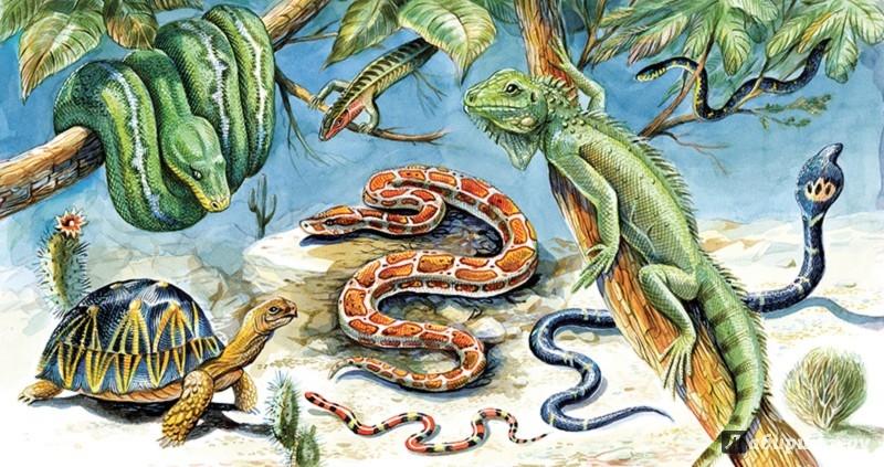 Иллюстрация 1 из 46 для Рептилии - Николай Сладков | Лабиринт - книги. Источник: Лабиринт