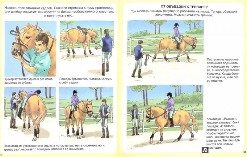 Иллюстрация 1 из 11 для Пони и лошади - Эмили Бомон | Лабиринт - книги. Источник: Лабиринт
