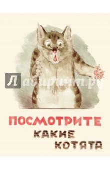 Матвеев Владимир » Посмотрите какие котята