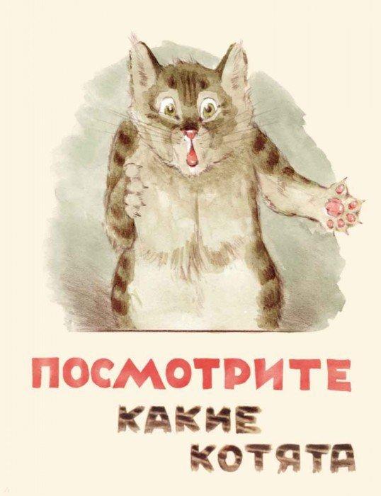 Иллюстрация 1 из 60 для Посмотрите какие котята - Владимир Матвеев | Лабиринт - книги. Источник: Лабиринт