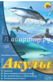 Наглядное пособие А4. Акулы наглядное пособие eastcolight скелет человека